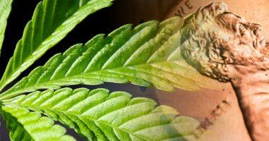 penny stocks marijuana stocks