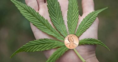 marijuana penny stocks