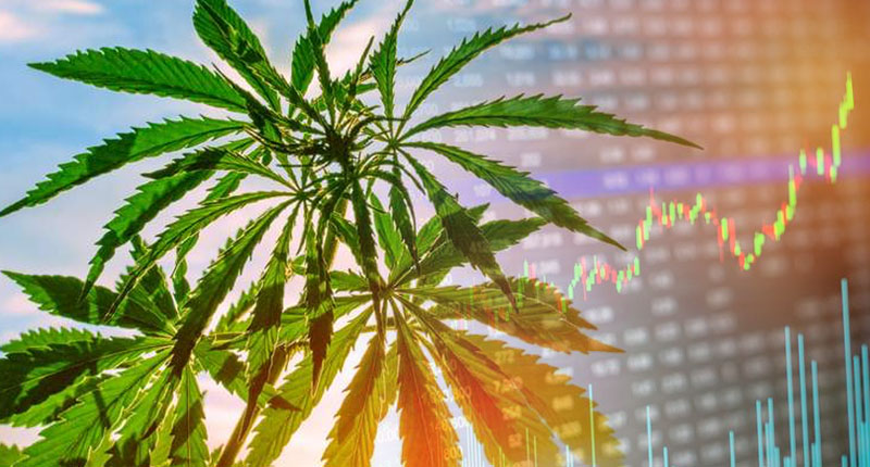 CannTrust to destroy $77 million worth of plants, inventory to regain compliance