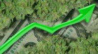 marijuana stocks top penny stocks to watch