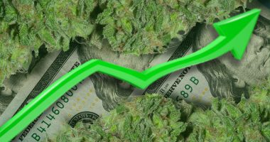 marijuana stocks top penny stocks to watch