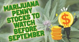 marijuana stocks to watch august