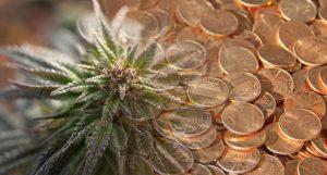 pot penny stocks to watch