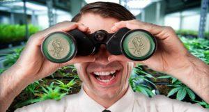 pot stocks to watch