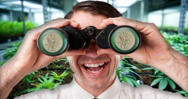 pot stocks to watch