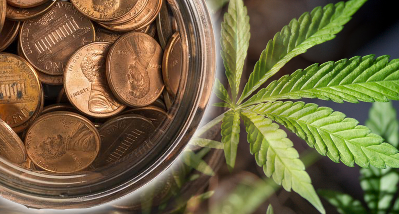CannTrust to destroy $77M of plants and inventory to comply with rules
