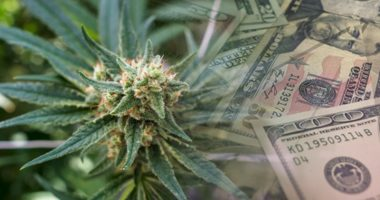 marijuana penny stocks to watch today