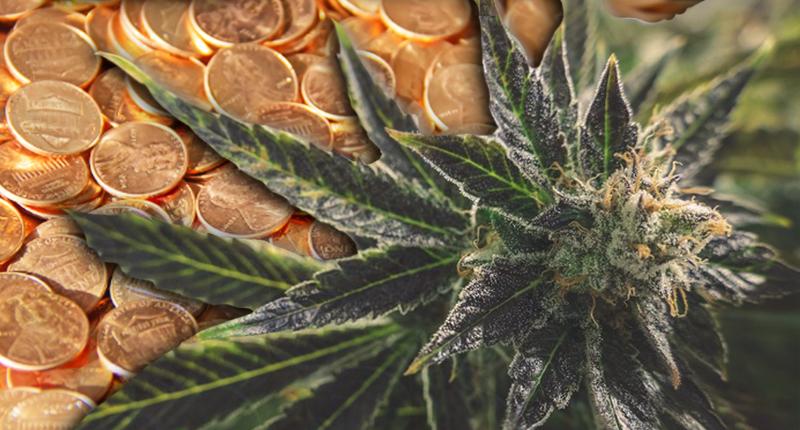 penny stocks cannabis marijuana pot