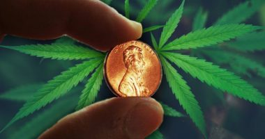 penny stocks to watch in cannabis industry