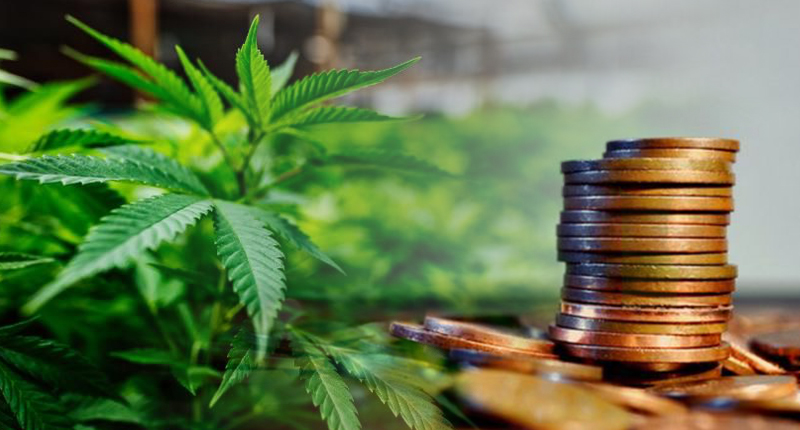 penny stocks to watch marijuana stocks today