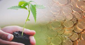 pot penny stocks to watch now