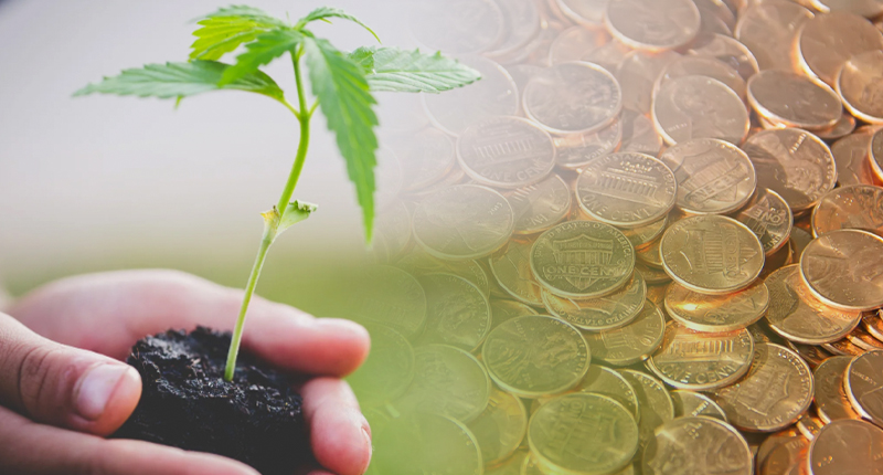 pot penny stocks to watch now