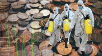 coronavirus penny stocks to trade today