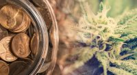penny stocks to watch cannabis today