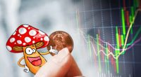 psychedelic mushroom penny stocks to watch right now