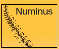 psychedelic stocks to watch Numinus (NUMI stock)