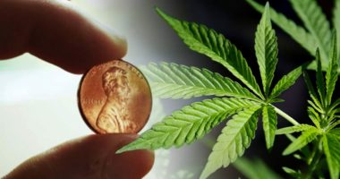best marijuana penny stocks to buy