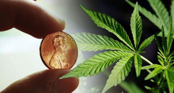 best marijuana penny stocks to buy