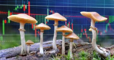 mushroom penny stocks to watch