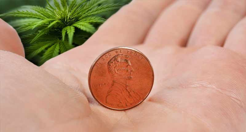 penny stocks to watch 2020 marijuana stock