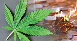 best marijuana penny stocks to buy avoid right now_