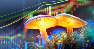 best mushroom penny stocks psychadelic stock to watch