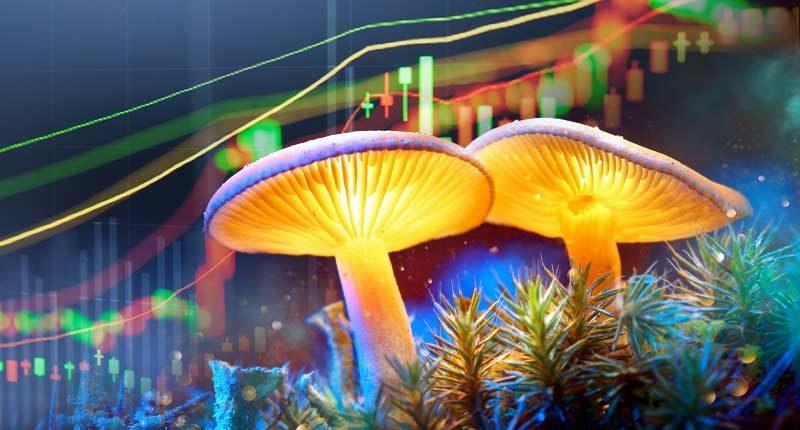 best mushroom penny stocks psychadelic stock to watch