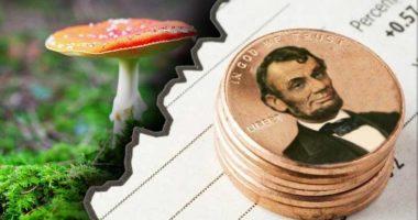 best mushroom stocks to watch right now