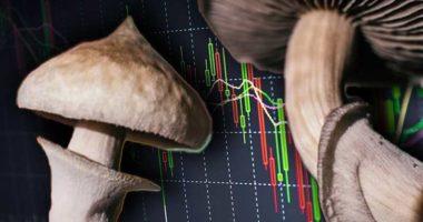 magic mushroom stocks to watch