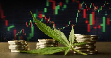 marijuana penny stocks to watch right now