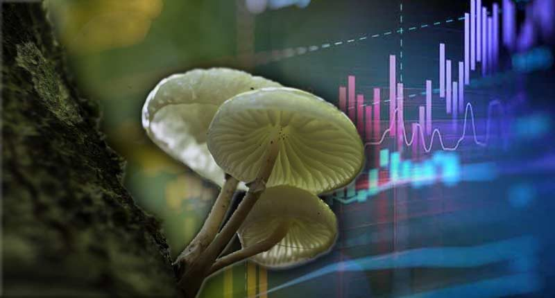 mushroom penny stocks to watch right now