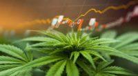 hot penny stocks to watch marijuana stock