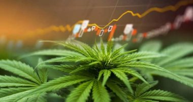 hot penny stocks to watch marijuana stock