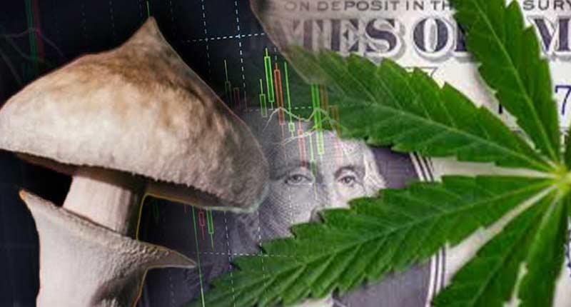 marijuana mushroom penny stocks to watch