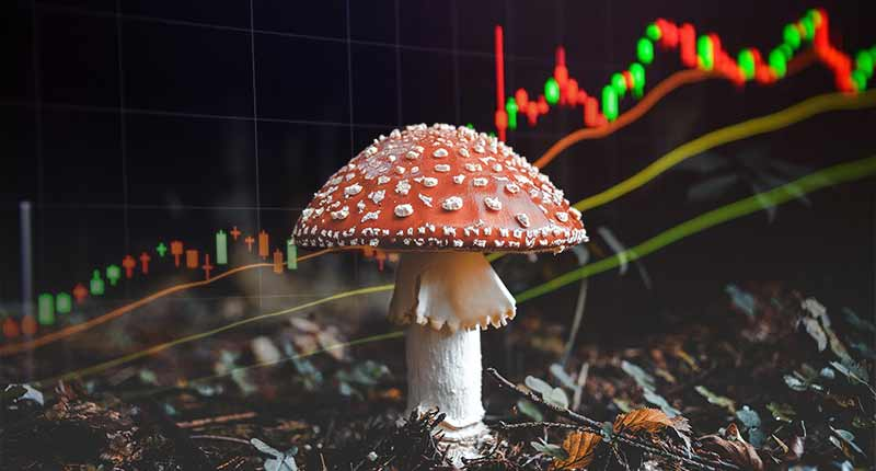 psychedelic mushroom stocks to watch this year