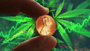 hot marijuana penny stocks to buy right now