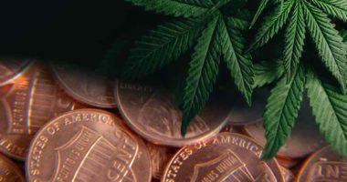 marijuana penny stocks to buy marijuana legalization